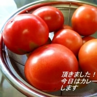 〇ぴーのまねまねクッキング  332 (トマトの肉巻き)