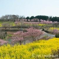春の田園。