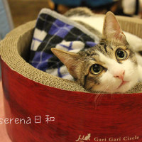 世界初の猫カフェ~台湾~