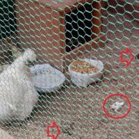 ひよこは5羽!卵は全部孵化しました!(^^)!