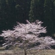 春爛漫(2004/4/10)