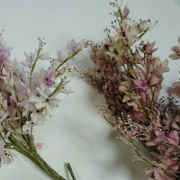 Ninaのセンダンと栴檀の花咲く樹