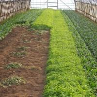 レタス農家と小松菜農家