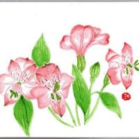 花色 いろいろ~