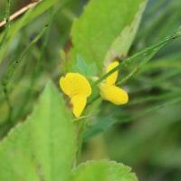樫原湿原の野草(1)