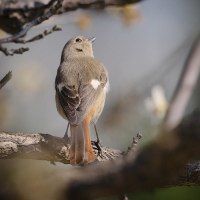 170226/0301_小出川-8 <鵯 以外の 鳥>
