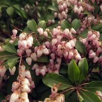 皇居東御苑 早春の花