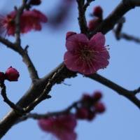 「日本の政治の新しい時代」さらに前進へ、日本共産党第27回大会始まる