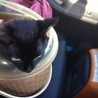 ソラを動物病院に連れて行った