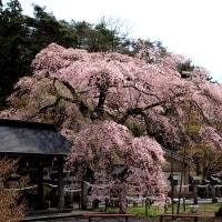 桜・桜の2日間