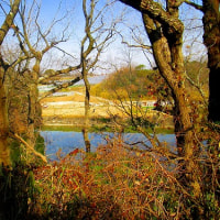 2月16日(木) ウオーキングコースを歩く
