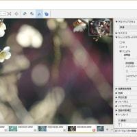 見頃の梅林: Image Data Converter現像編