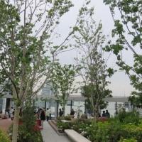 【藤の花 梨の花 花桃の花 芍薬の花 Gsix屋上庭園 綺麗に咲いていました】