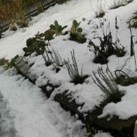 4日目の雪