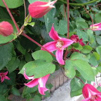 Botanical Life