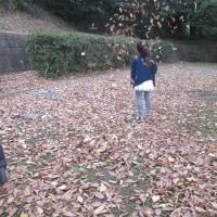 イチョウの木🍁