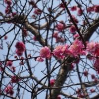 春を感じる草木