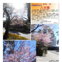 花巡り 「梅-192] 八方園