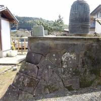 浄信寺のハクモクレン