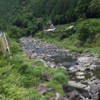 今日の勝浦川の鮎釣り