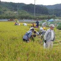 児童と稲刈り体験
