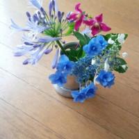 庭の花(初夏)