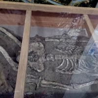 豊科郷土史博物館の縄文人骨を見て