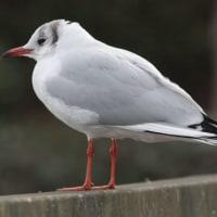 年末を迎えた水戸市大塚池の野鳥