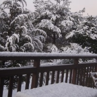 雪見コーヒー