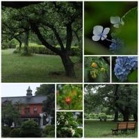 白山神社と小石川植物園