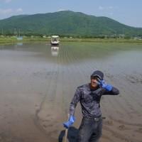 常陸小田米コシヒカリの田植えが終盤です。