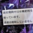 梅酢に赤紫蘇 家内の「よもやま話」