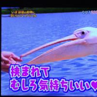 6/25 シムラ動  大野君とガー こんなこと、相場君にはできない