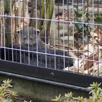 平川動物公園のカワウソ家族~鹿児島旅行14