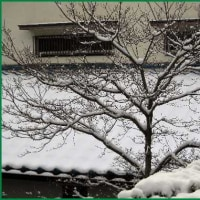 何年ぶりか 「久しぶりの大雪」に驚く