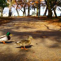 公園の散歩in大津市