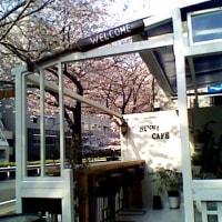 桜の頃の SUNNY CAFE  東京 広尾 (恵比寿)