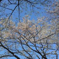 四月十七日、月曜日雲広がって~~~春>初夏へ~~~。