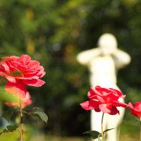 神代植物公園(大温室)2012秋