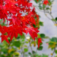 万博公園・日本庭園