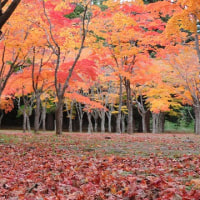 笹流れダムの紅葉