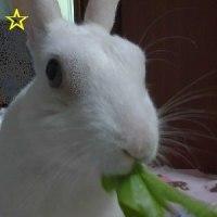 No.2259☆ゆきたん☆明日葉が食べられるようになったのは・・・