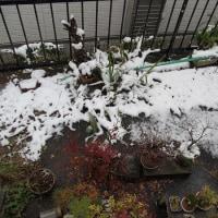 まだ秋のはず~~=積雪
