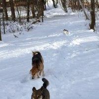 雪❄️散歩