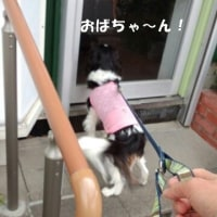 キャバの赤ちゃんは可愛いね(*^_^*)