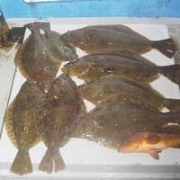午前便ウタセマダイ、午後便ヒラメ釣りです。