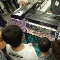 県大ミニ水族館@青少年のための科学の祭典