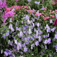 2007-10-23花の美術館03