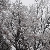 ★ベンチ冷たし 春そっち?💛モモジリ友情出演