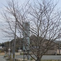 はがき絵  3月22日 土筆 福岡タワー 23日 土筆2 芹 24日 さくら